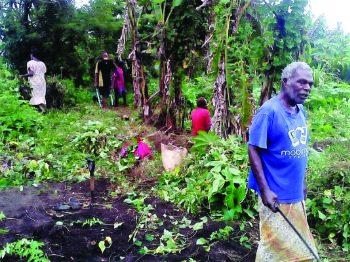 Tanna community garden